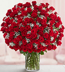 100 Red Roses in a Vase from your Sebring, Florida florist