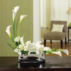 Lily Tranquility from your Sebring, Florida florist
