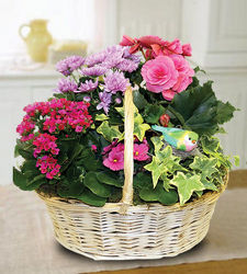 Blooming Garden from your Sebring, Florida florist