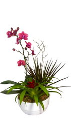 Orchid and Bromiliad in Ceramic from your Sebring, Florida florist