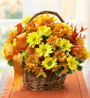 Fall Daisy Basket from your Sebring, Florida florist