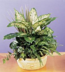 Deluxe Dish Garden from your Sebring, Florida florist