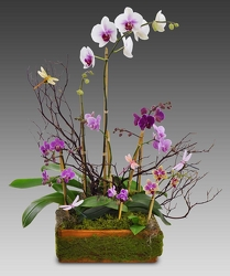 Deluxe Orchid Garden from your Sebring, Florida florist