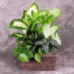 Dish Garden In Wood Box from your Sebring, Florida florist