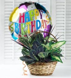 Birthday Dish Garden from your Sebring, Florida florist