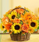 Fields of Europe Fall Basket from your Sebring, Florida florist