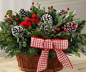 Rustic Evergreens from your Sebring, Florida florist