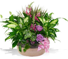Large Dish Garden With Cut Flowers from your Sebring, Florida florist