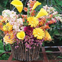 Grapevine Basket of Sunshine from your Sebring, Florida florist