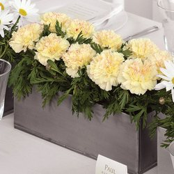 Contemporary Centerpiece from your Sebring, Florida florist
