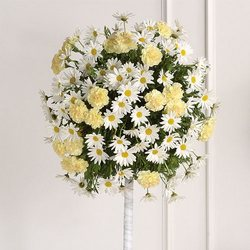 Daisy Topiary from your Sebring, Florida florist