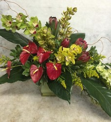 Elegant Anthuriums and Orchids from your Sebring, Florida florist