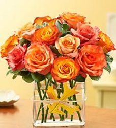Modern Roses Dozen Orange from your Sebring, Florida florist