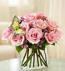 Modern Roses Dozen Pink from your Sebring, Florida florist