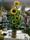 Sunflower Funflowers from your Sebring, Florida florist