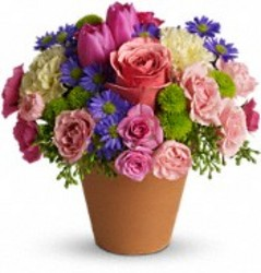 Spring Sonata from your Sebring, Florida florist