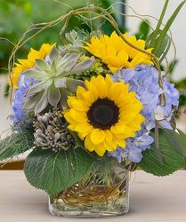 Sunflowers and Hydrangeas from your Sebring, Florida florist