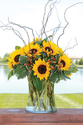 Classy Sunflowers from your Sebring, Florida florist