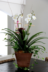 Orchid Duo from your Sebring, Florida florist