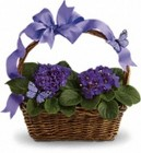 Violets and Butterflies from your Sebring, Florida florist