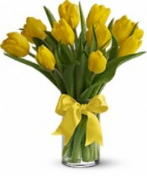 Yellow Tulips from your Sebring, Florida florist